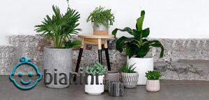 گیاهانی که آلودگی هوا را کاهش میدهند، بشناسید