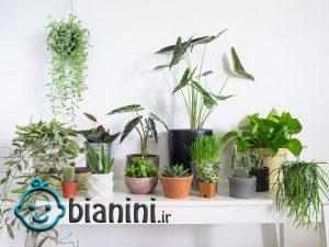 گیاهان خانگی شما آفت دارند؟