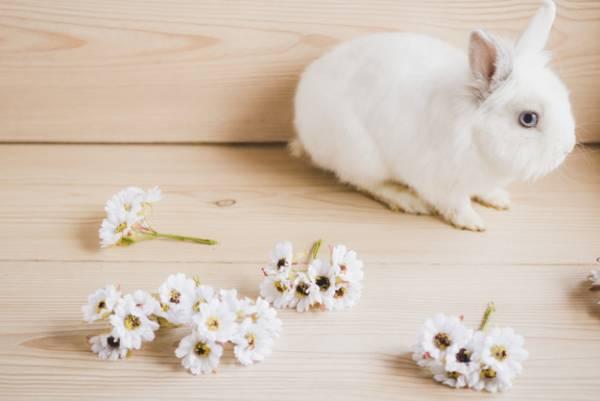 تست بارداری با ادرار خرگوش ها