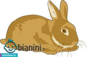 قصه برای کودک، چهار خرگوش کوچولو